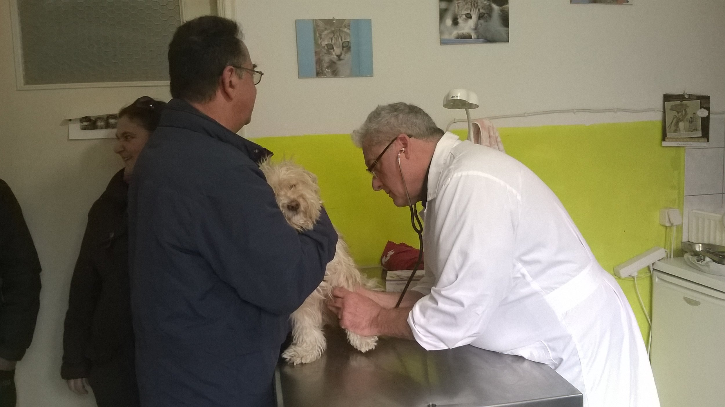 Checking the heart rate of a local family's dog