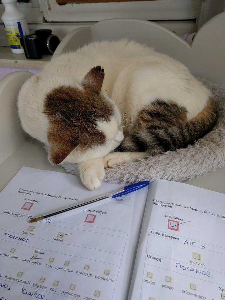 Sara, a cat from our shelter, performing secretarial duties