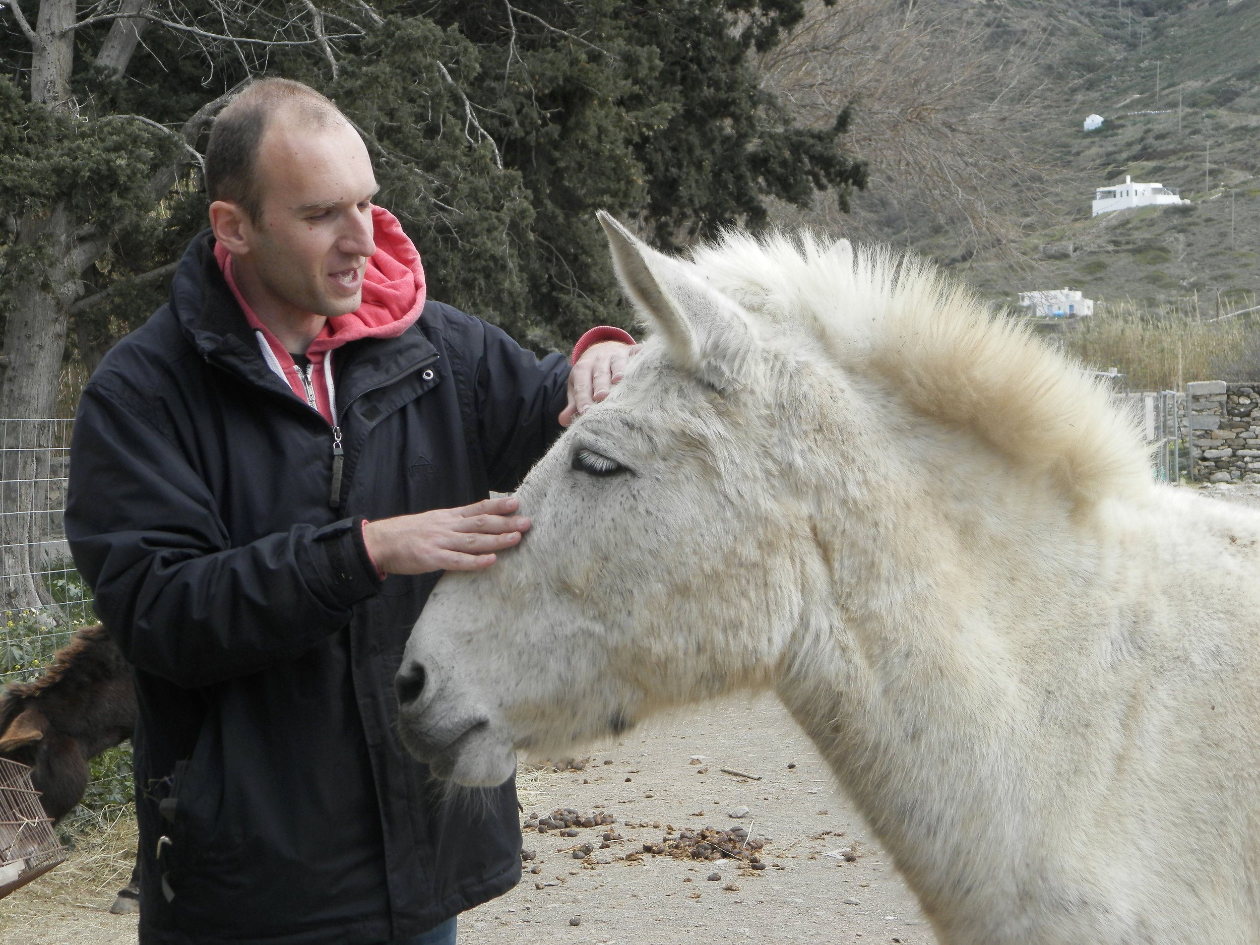 Meropi receives caresses from our volunteer Giorgos