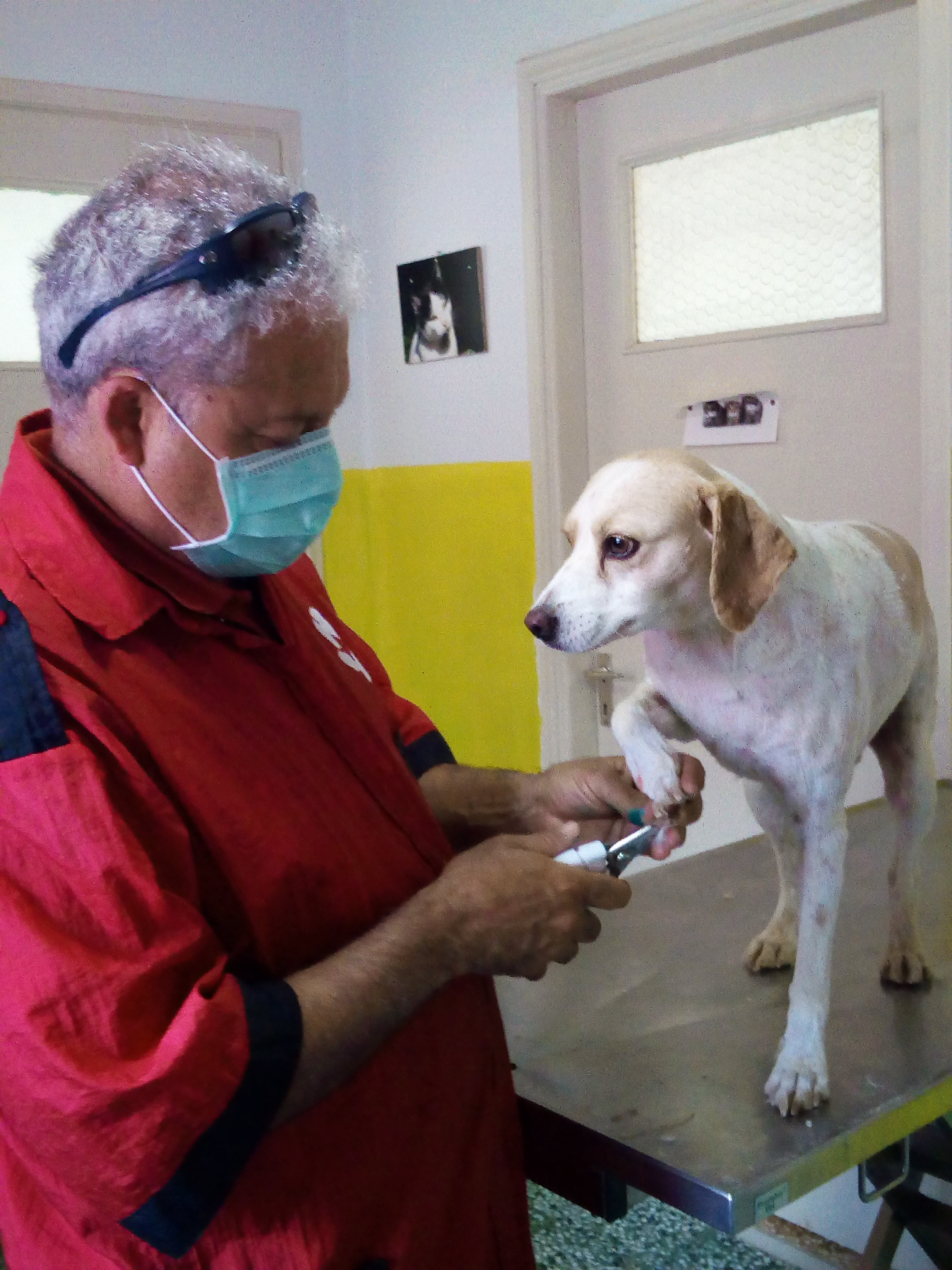 Dr. Vasalakis cuts the nails of our dog Liza