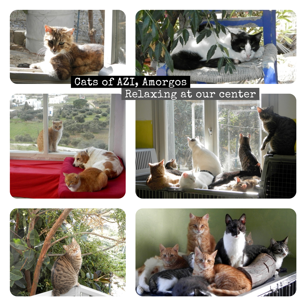 AZI-cats-collage.jpg