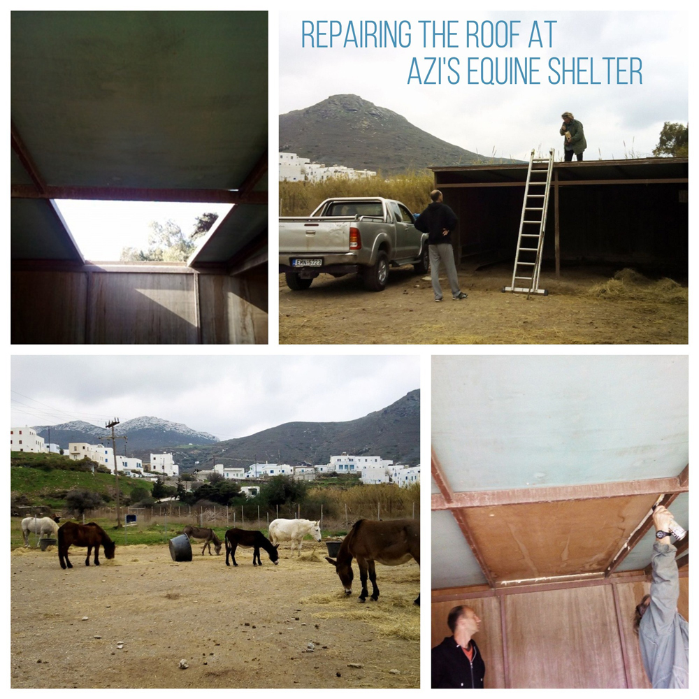 Help keep these equines comfortable and protected from bad weather. Thank you for your support!