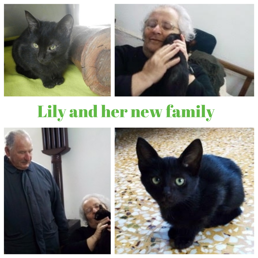 lily-family.jpg