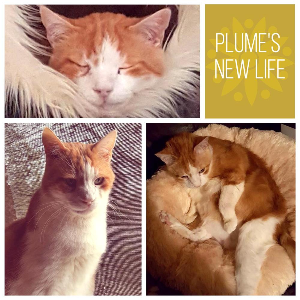plume-collage.jpg