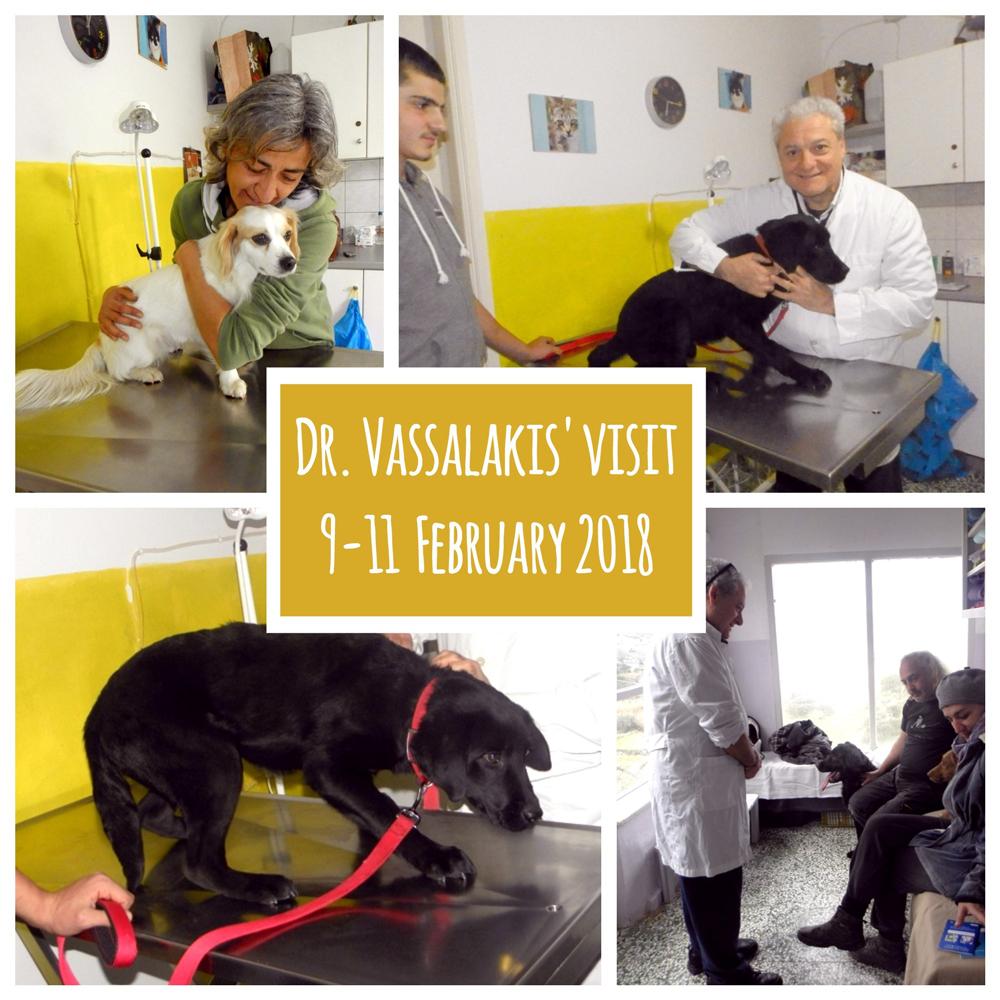 vet-visit-collage-(1).jpg