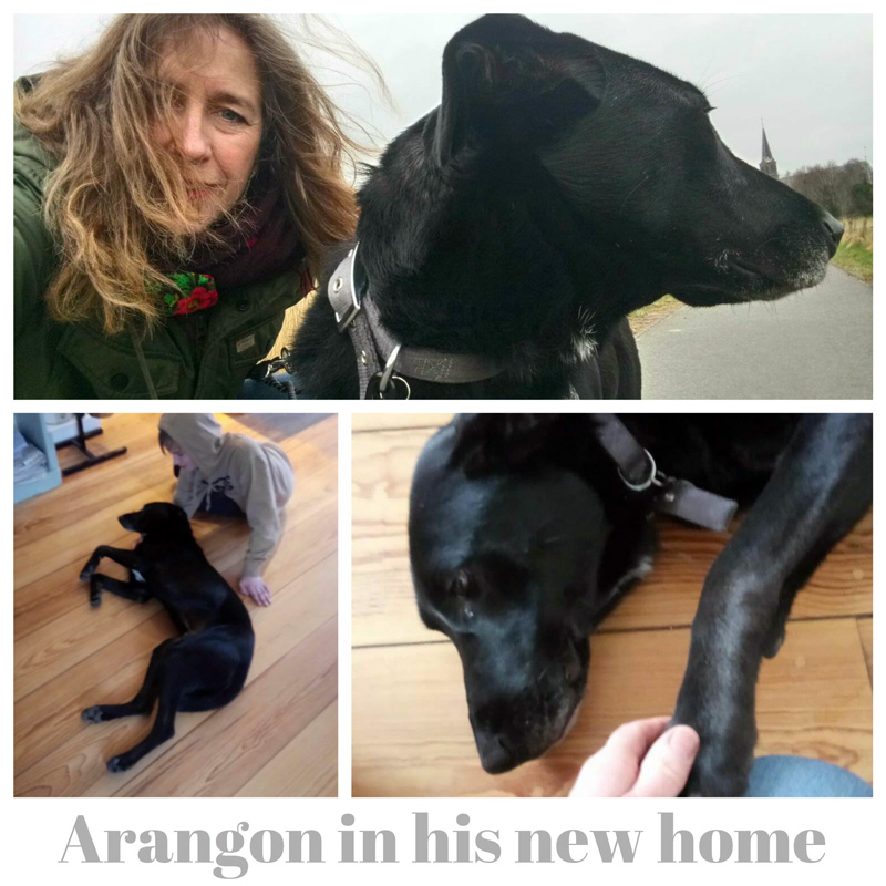 a_Arangon-new-home.jpg