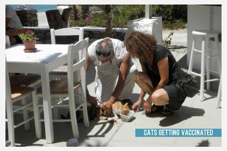 cats vaccine 2.jpg