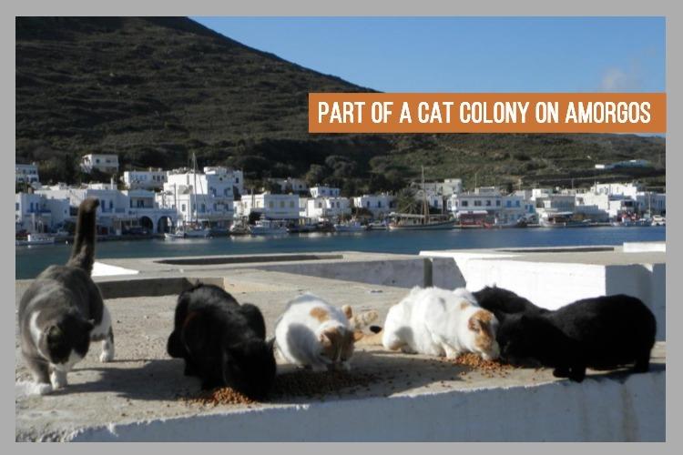 cat colony (1).jpg