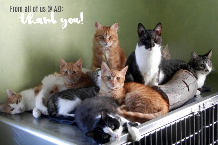 thank you cats.jpg