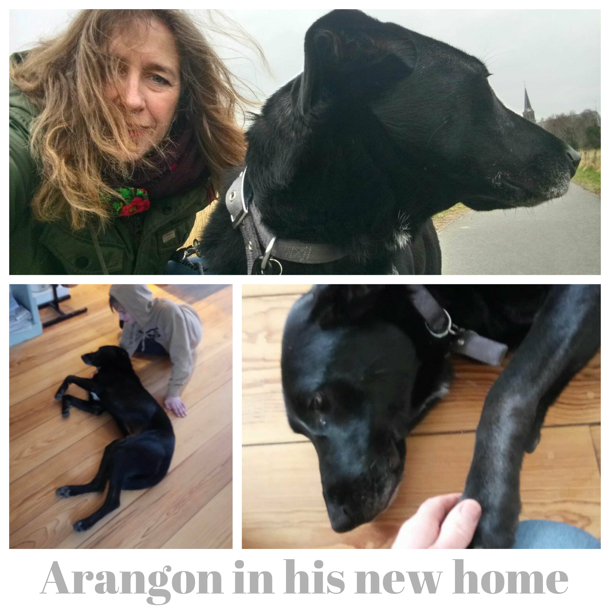 Arangon new home.jpg