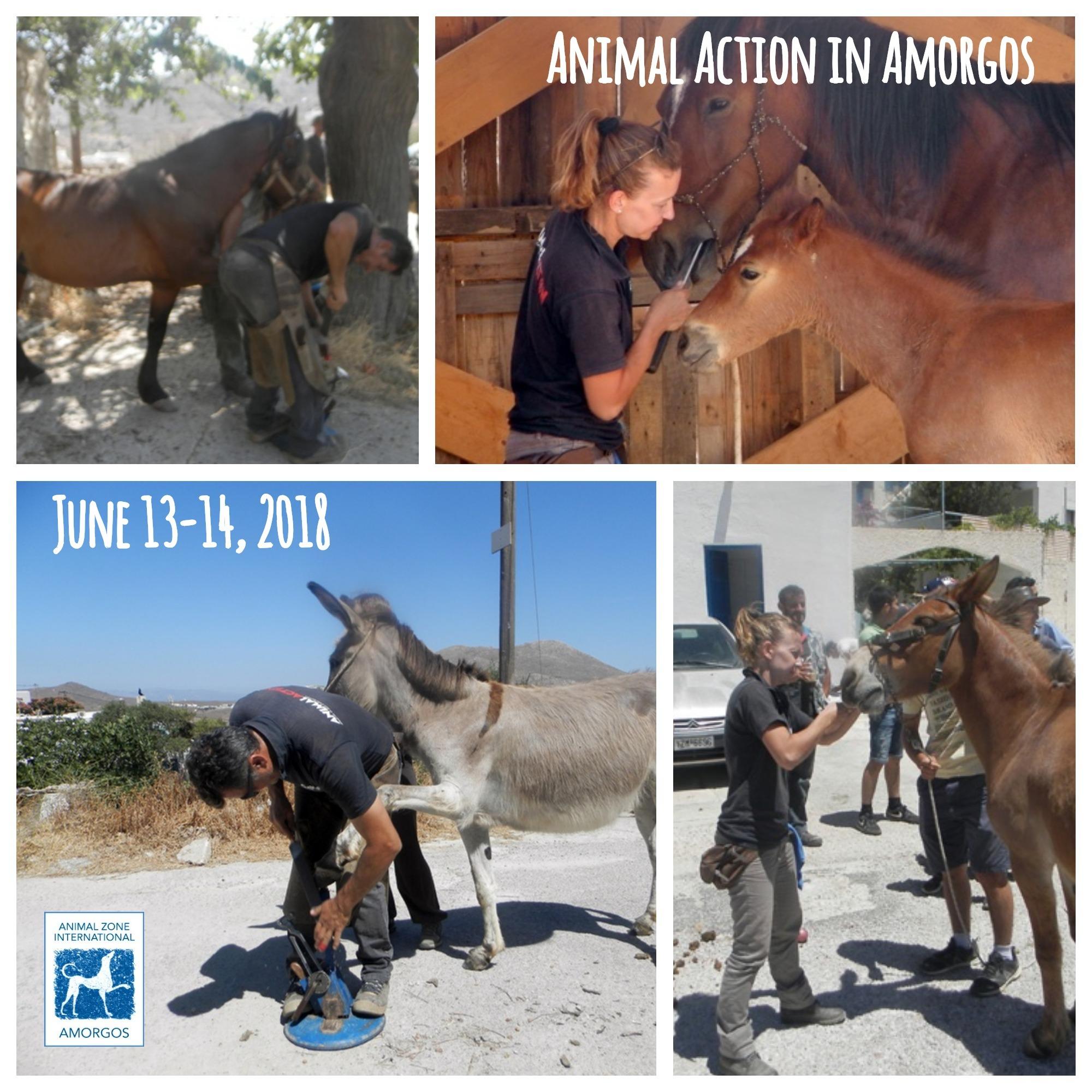 animalactio2018.jpg