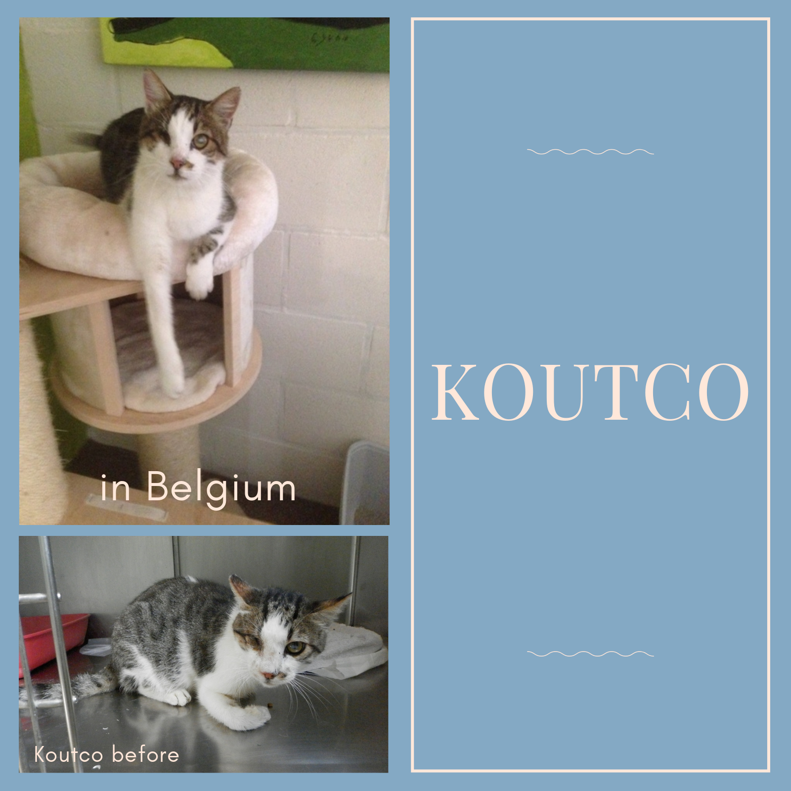 koutco-collage.jpg