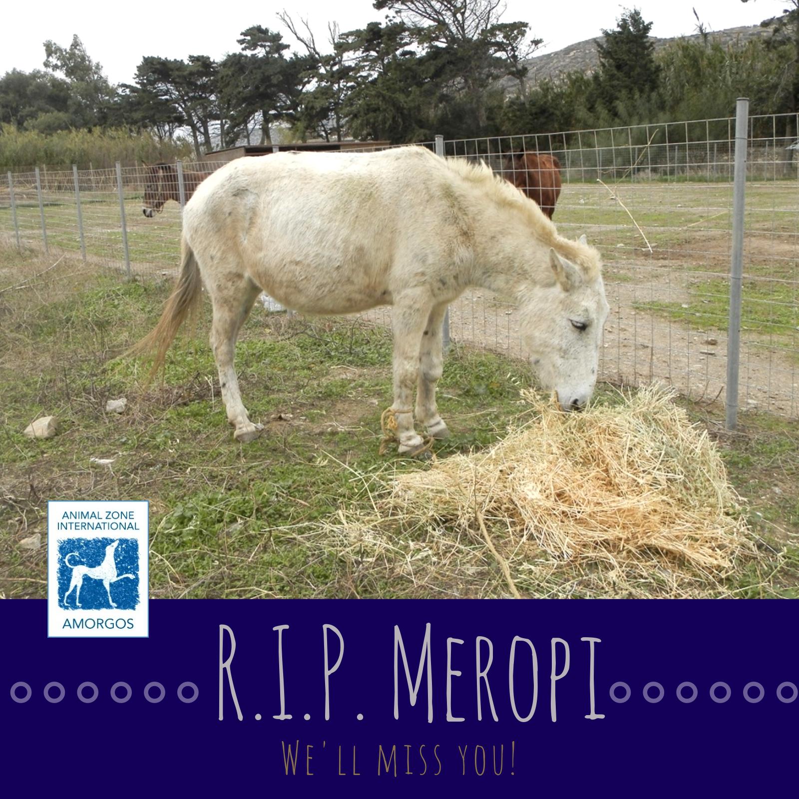 rip-meropi-2018.jpg