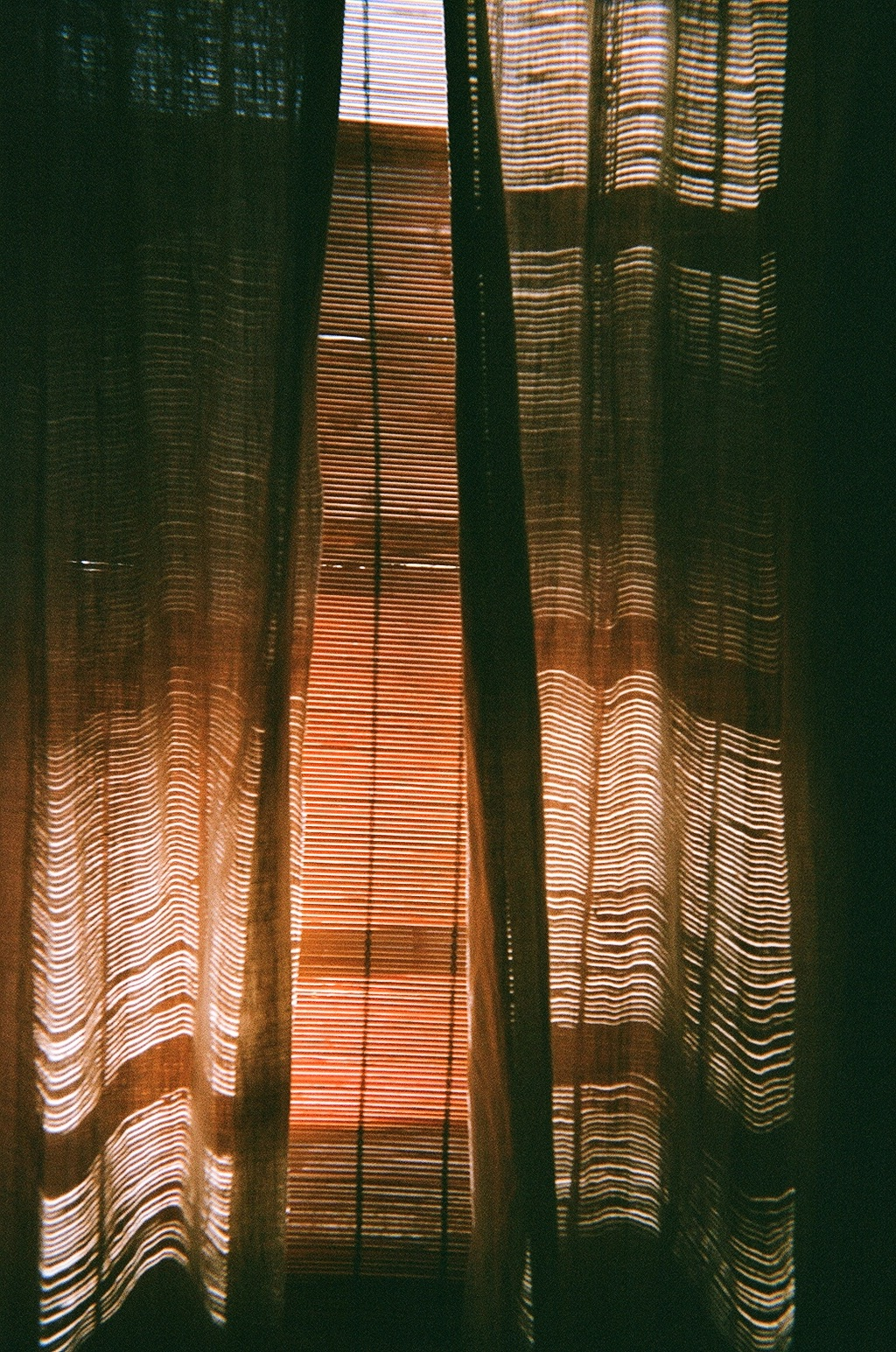 film from a disposible camera. photo by Lauren Ardis