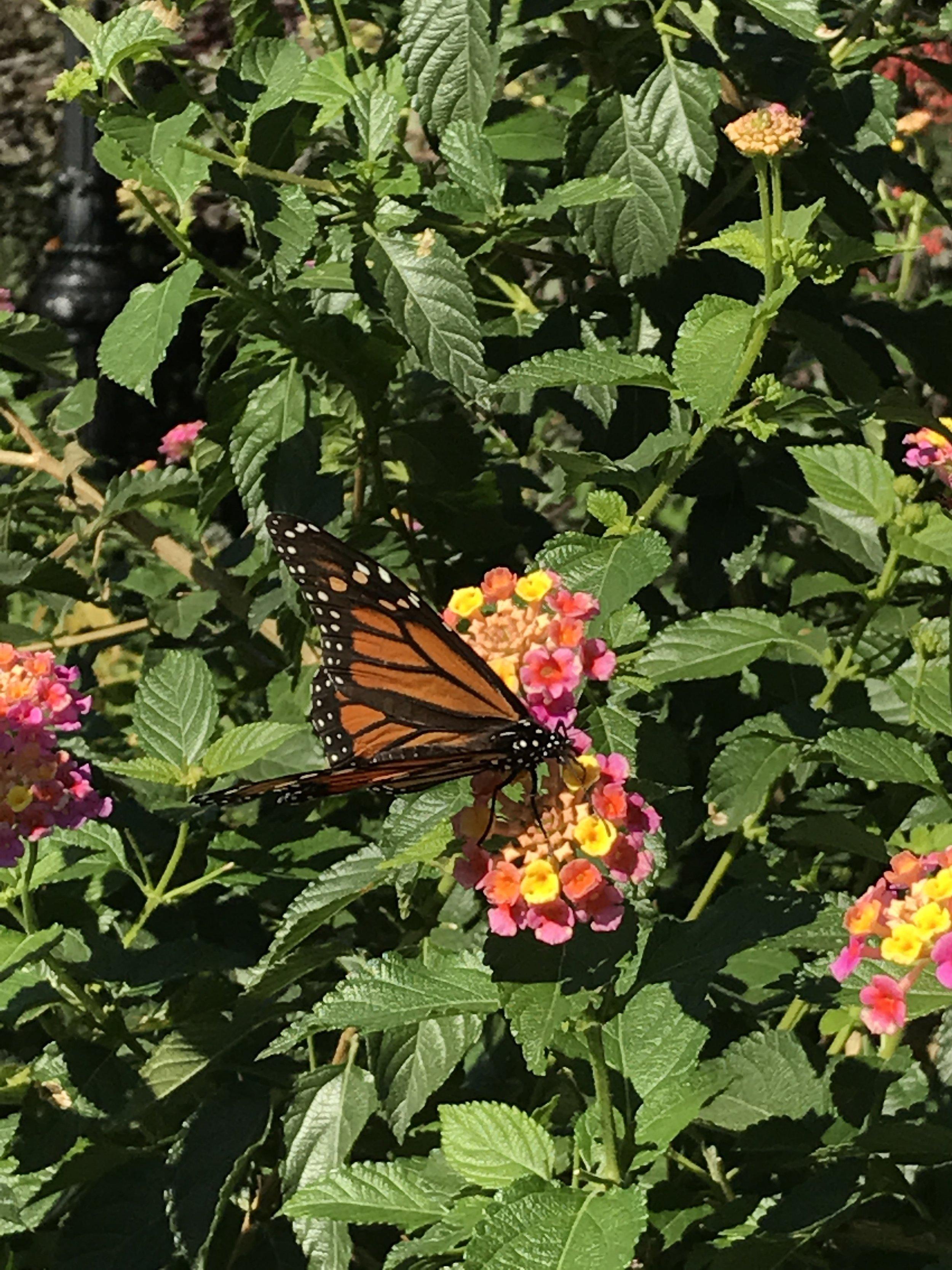 A butterfly on a walk