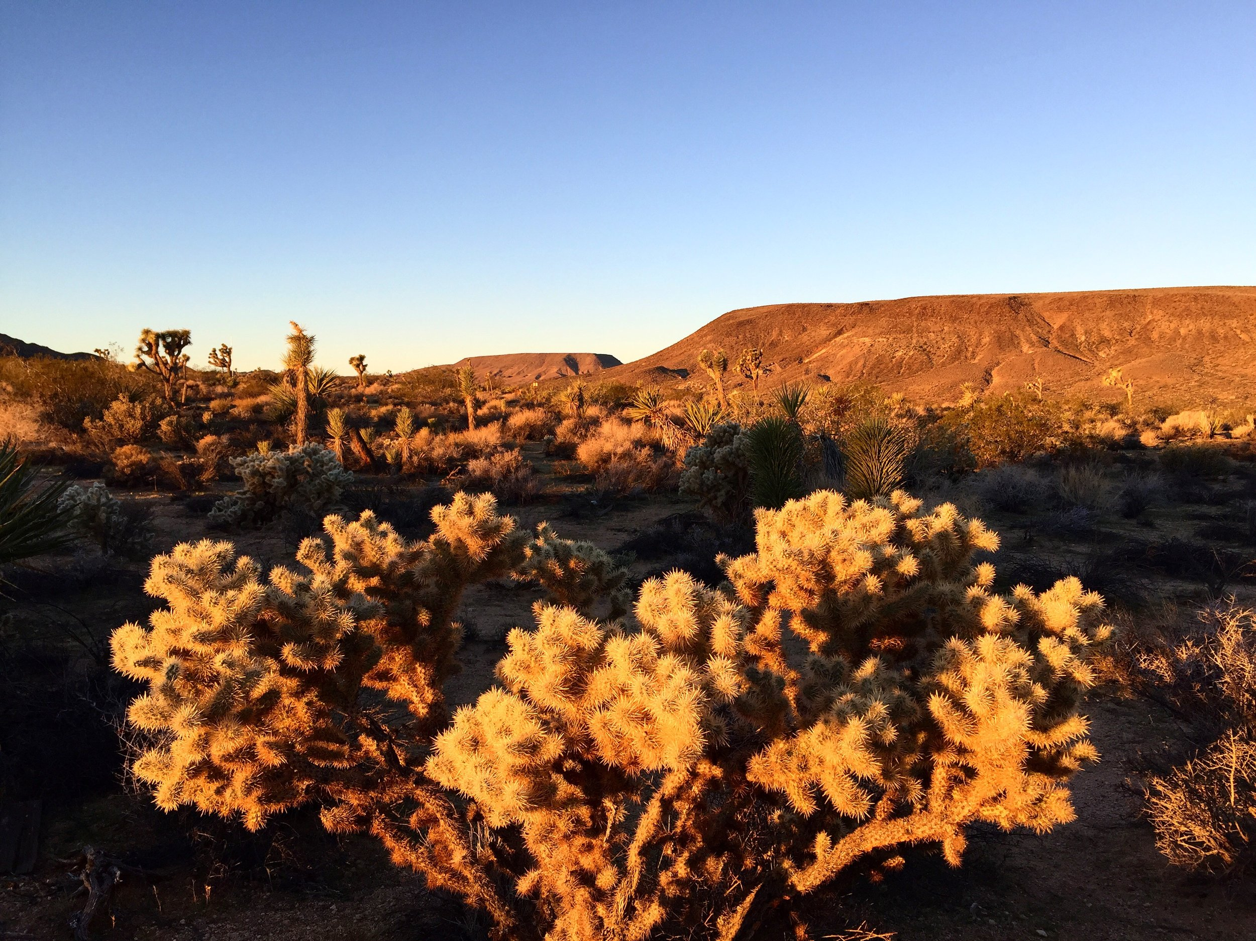 Last light of the year on the cholla outside our back door. I'm holding my daughter who's watching the dog who's chasing a rabbit over the threshold of January.