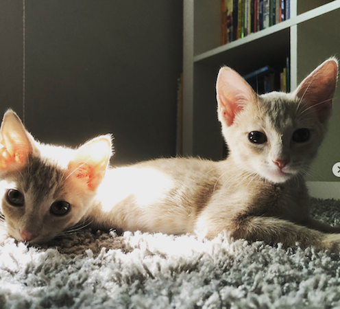 new family members: Coco and Carlos