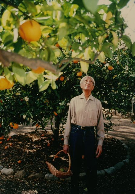 J. Krishnamurti in his orange groves in Ojai