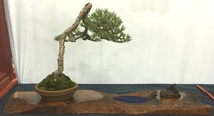 Scots Pine by John Jaramillo