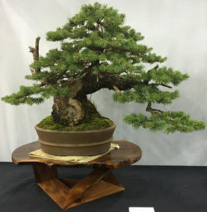 Colorado Blue Spruce by Jason Elder