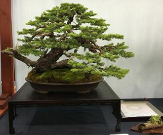 Colorado Blue Spruce by Todd Schlafer