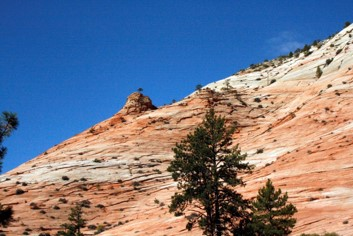 Zion Slope – Trees emerge straight out of the sandstone slopes.