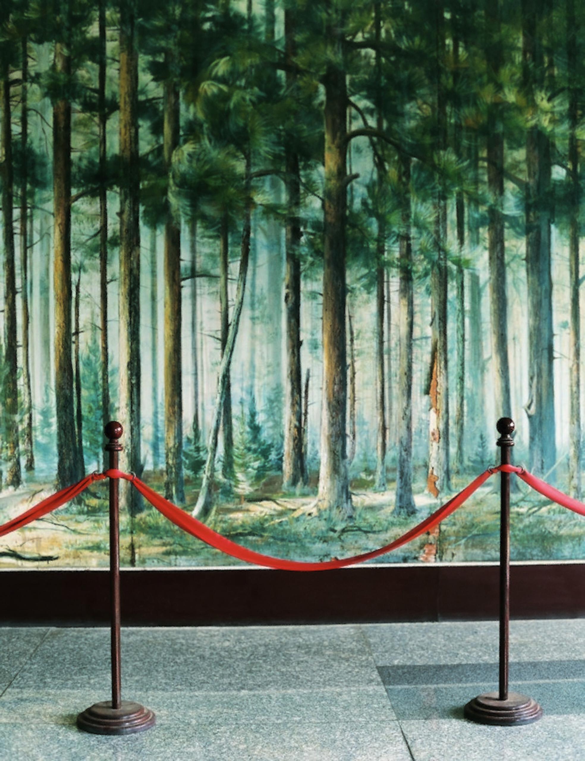 EX 1 forest.jpg