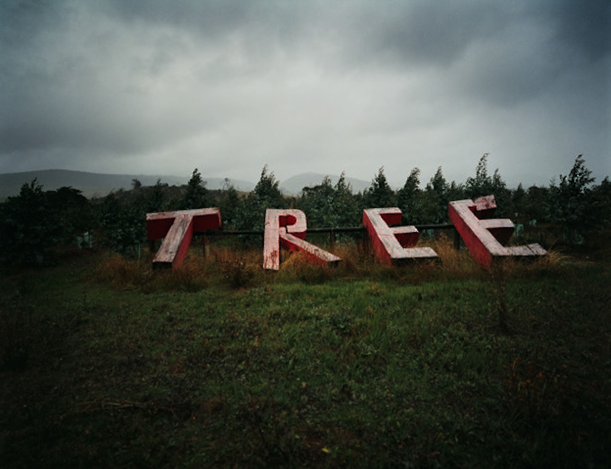 EX 4 Tree_2.jpg