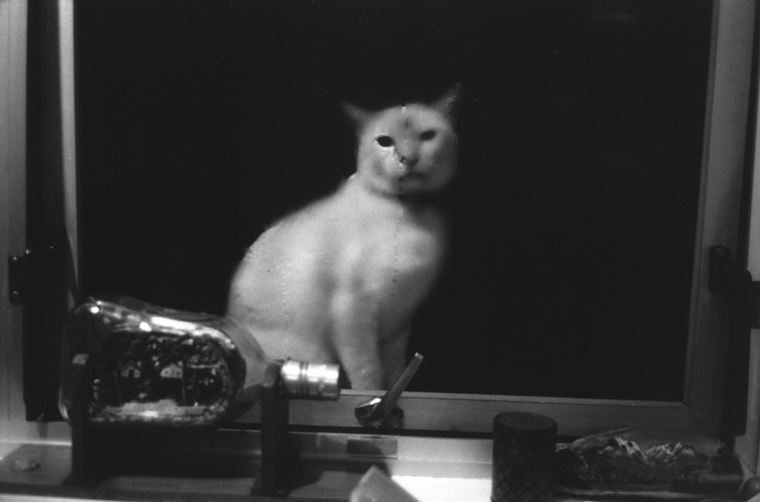 honey cat.jpg