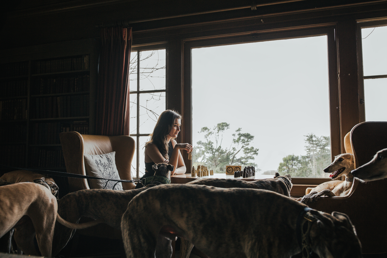 hillary jeanne photography + teryn grey, chess, greyhound dogs