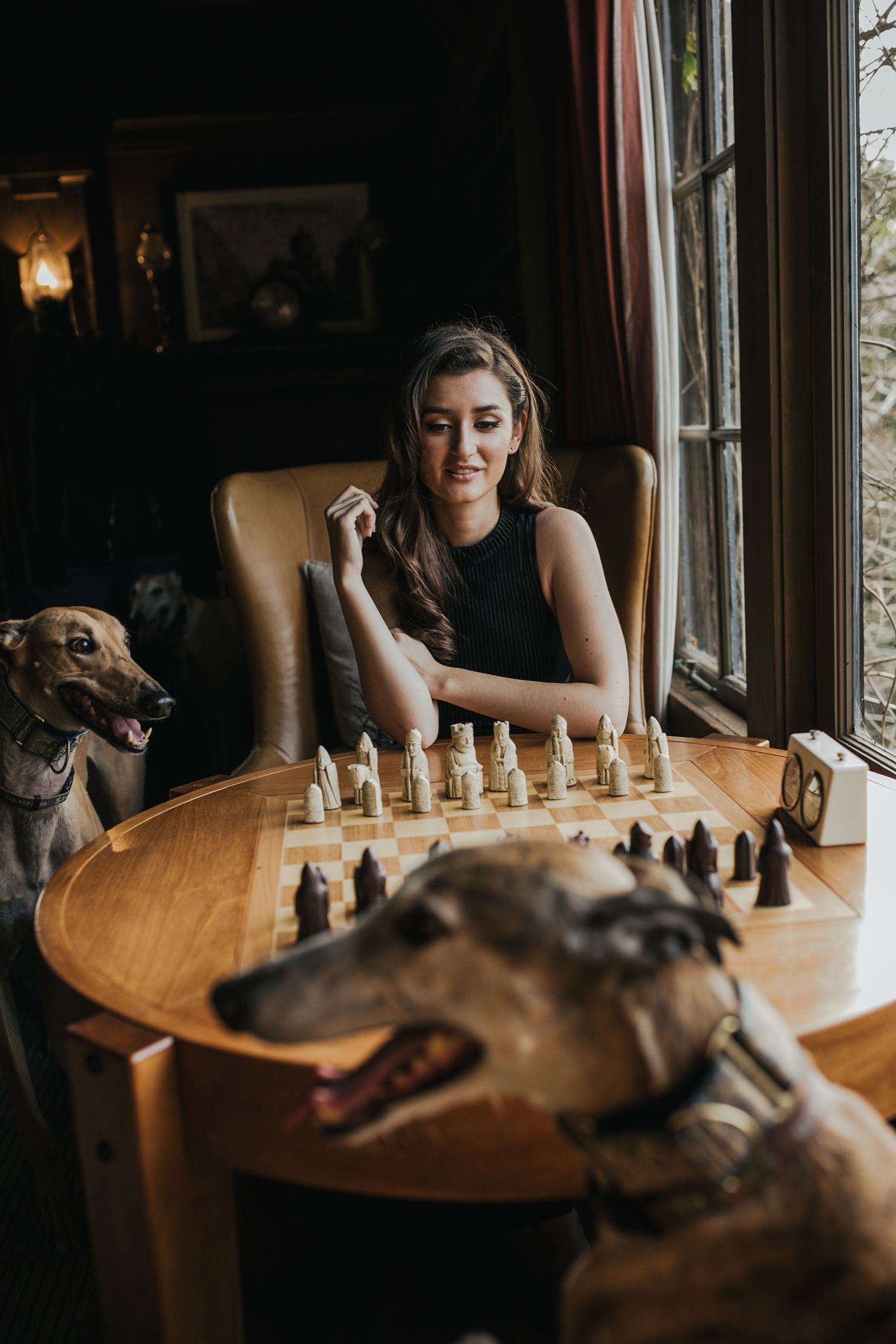 hillary jeanne photography - teryn grey, chess, greyhound dogs