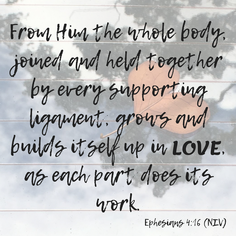 From him the whole body, joined and held together by every supporting ligament, grows and builds itself up in love, as each part does its work. (1).jpg