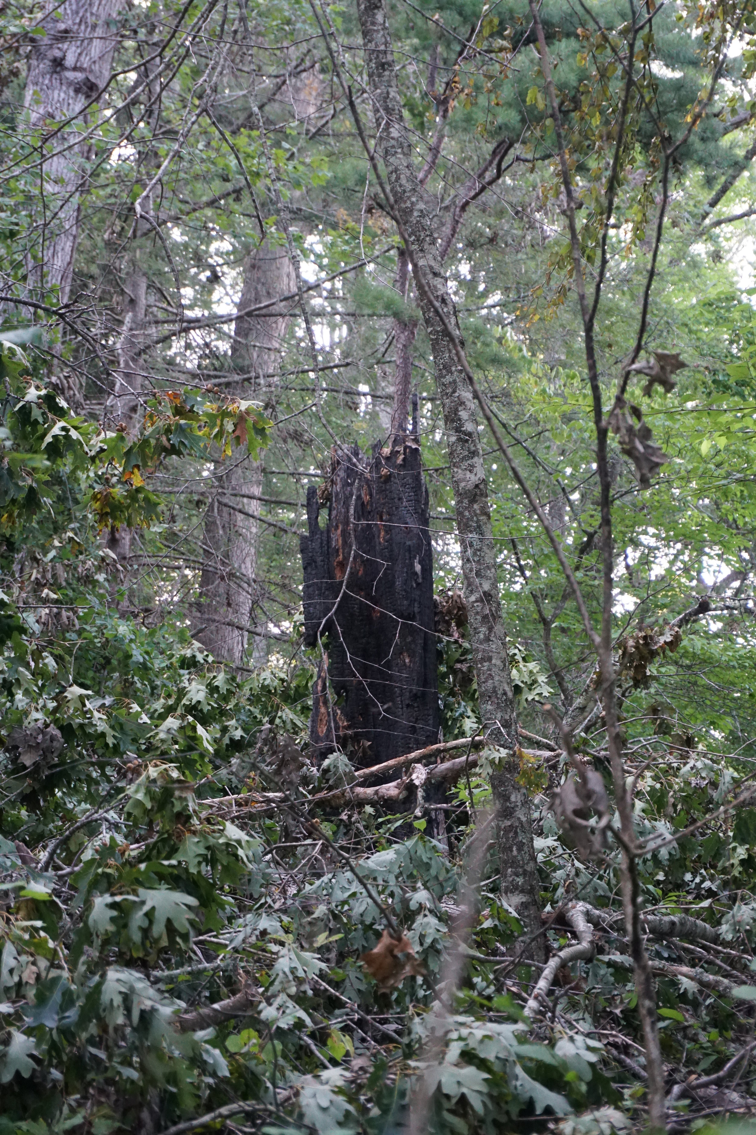 Lightning struck wood. Definitely will hike back here.