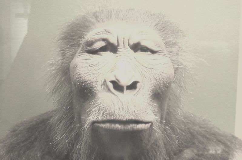 paranthropus_boisei.jpg