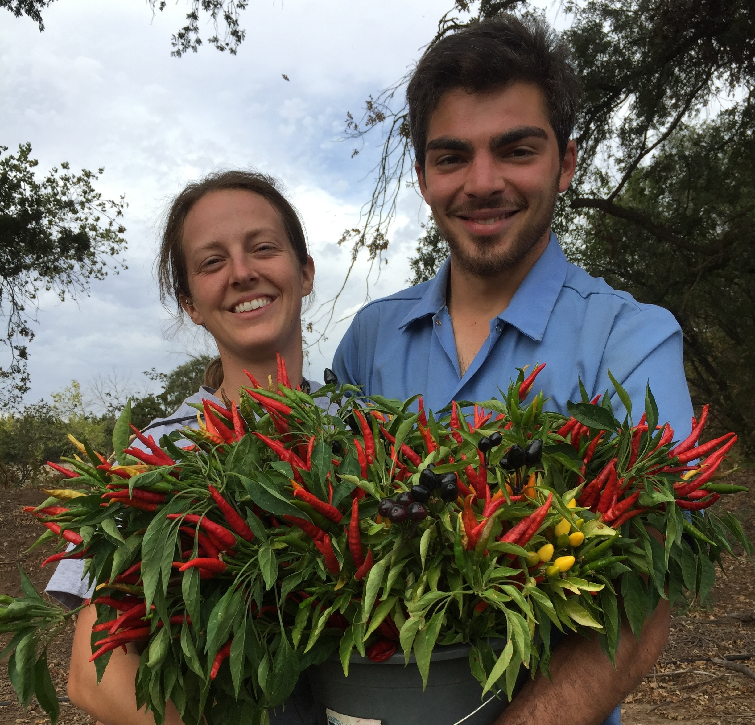 We love these spicy peppers! They add unique texture and color to our Autumn bouquets.