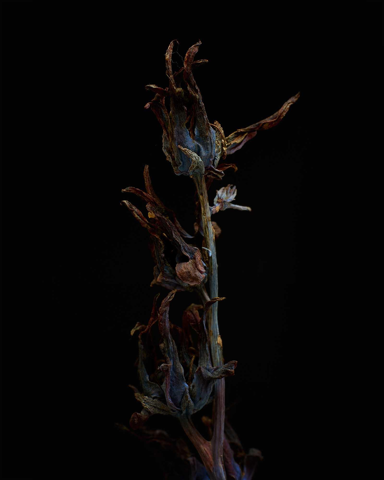 dried1.jpg