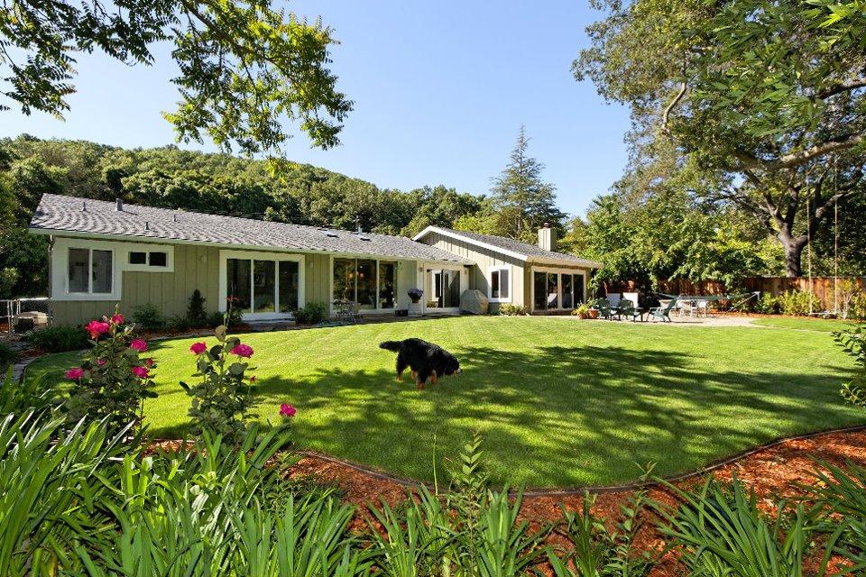 backyard dog.jpg