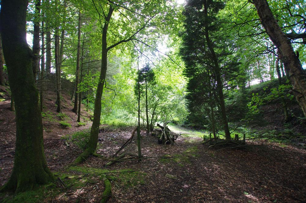 woodland-area.jpg