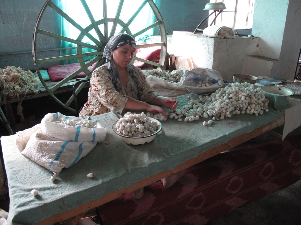 Workers sorting the boiled silk cocoons