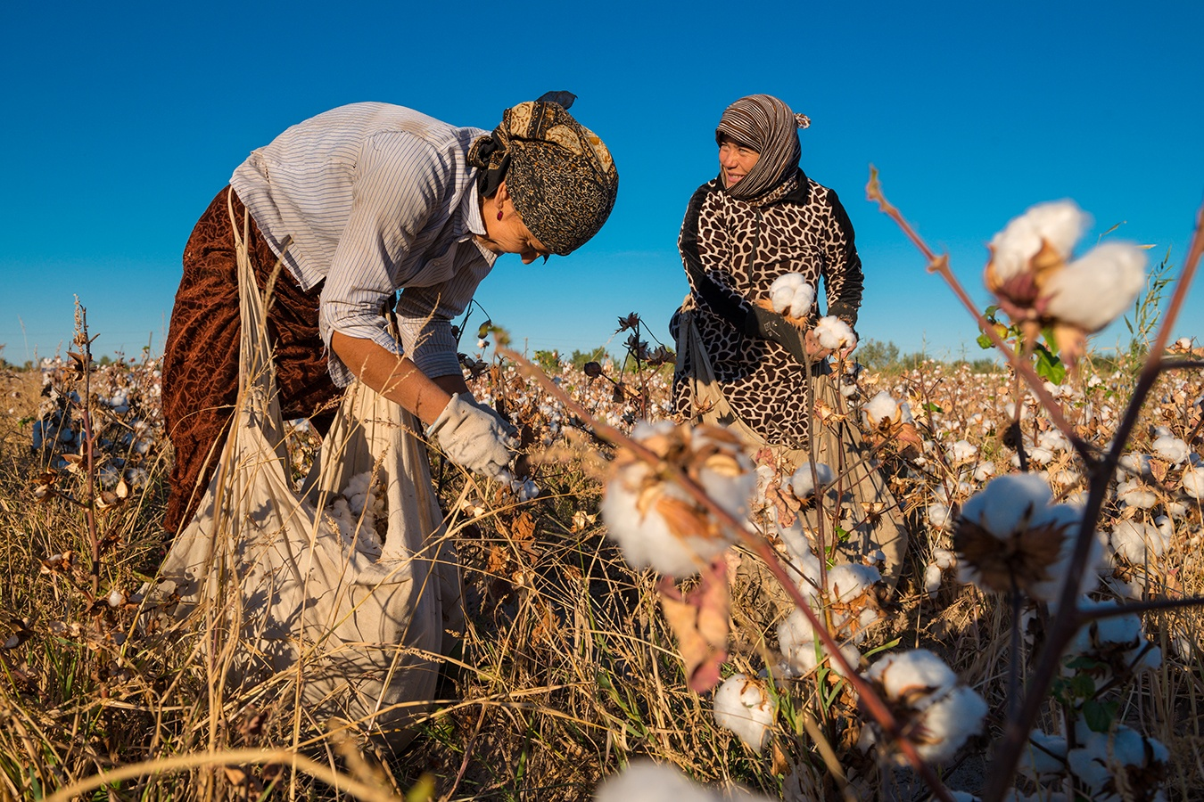 Uzbekistan has a state run system of forced labour to produce it's cotton (image courtesy of Open Society Foundations)