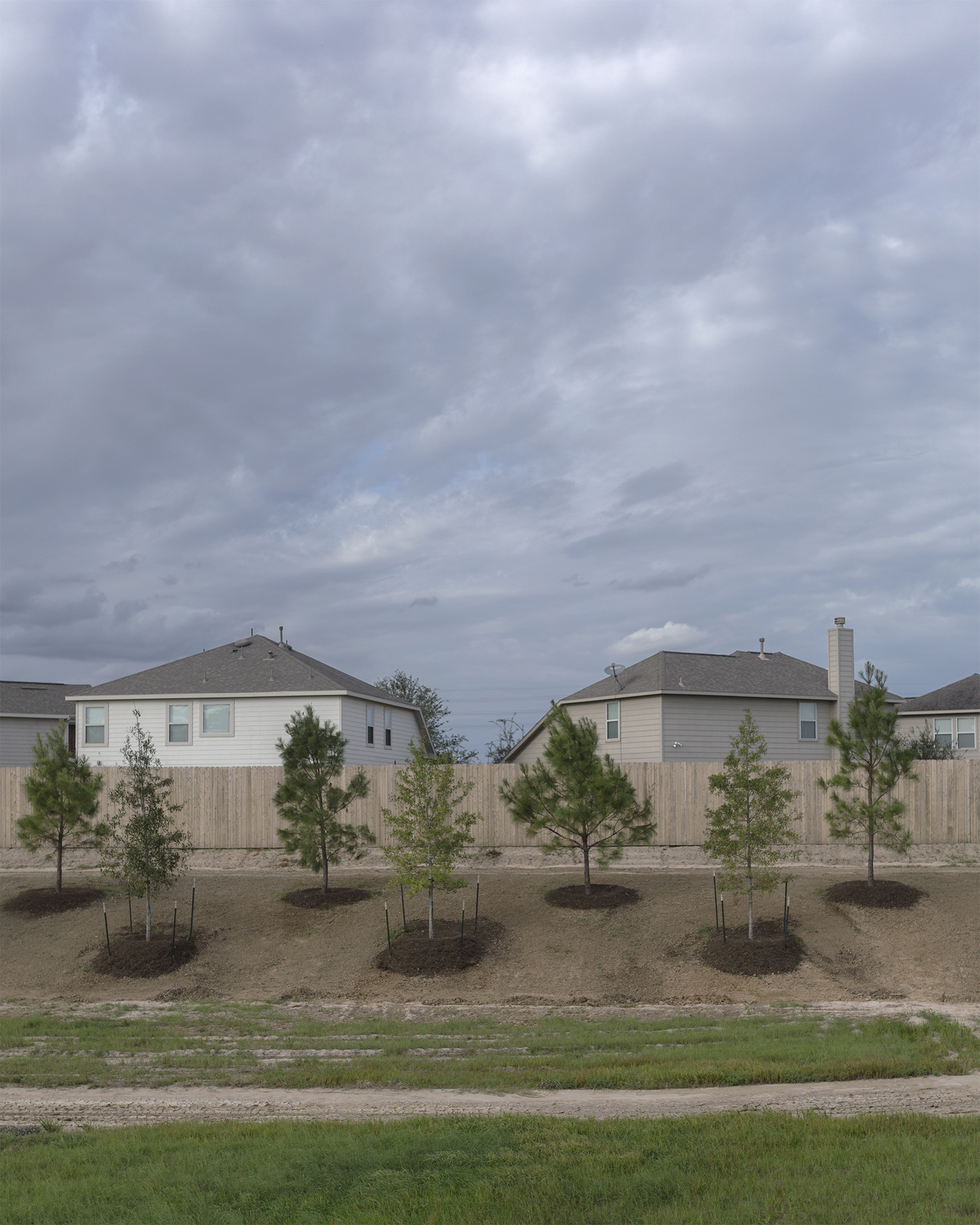 East of downtown Fulshear, with trees that are strategically plotted, the control that nature once had over the Texas prairie is now overwhelmed with a suburban landscape.