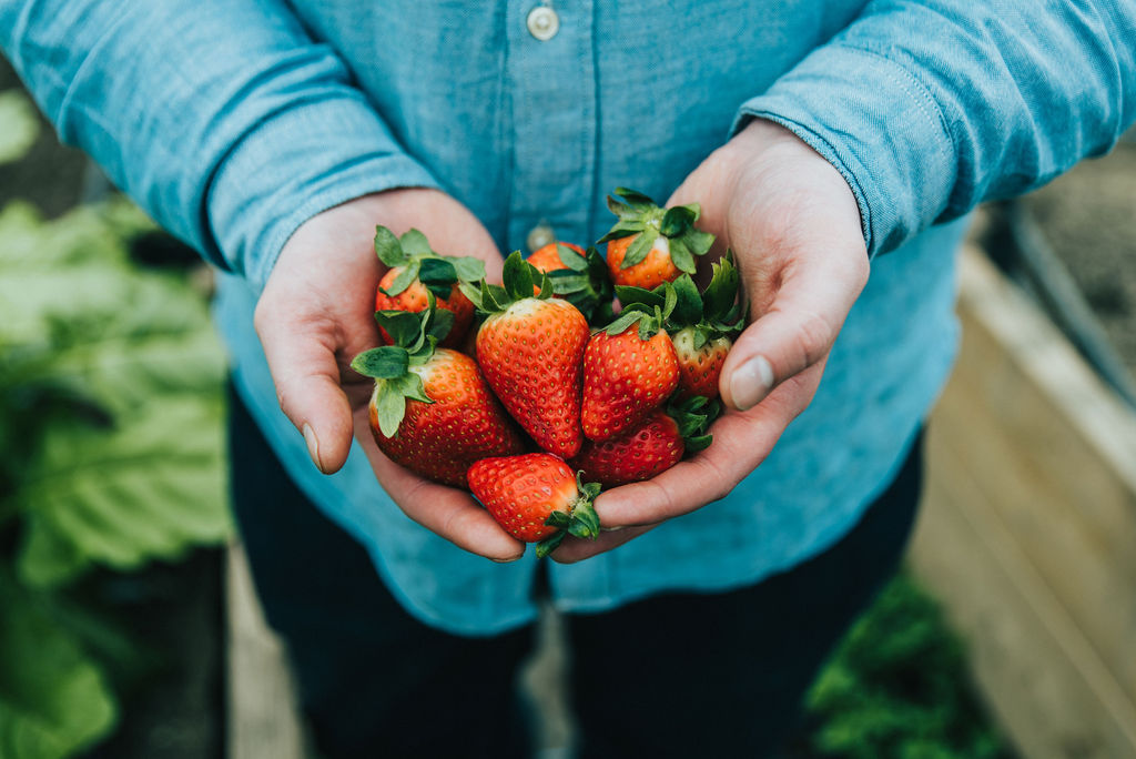 There are six varieties of strawberries being grown at The Small Holding this summer