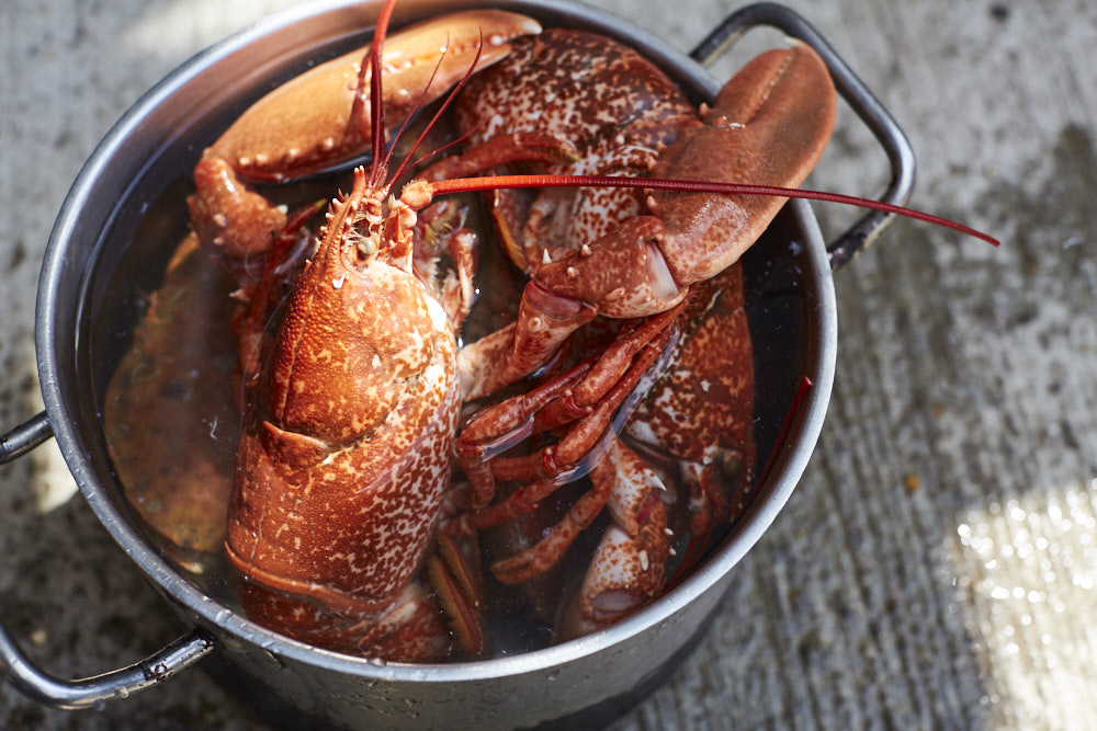 Native lobster from Cornwall