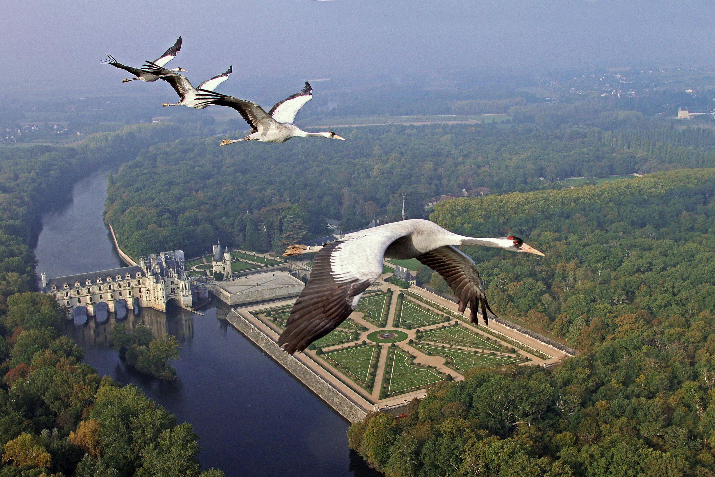 Earthflight_Common_Crane_03_1.jpg