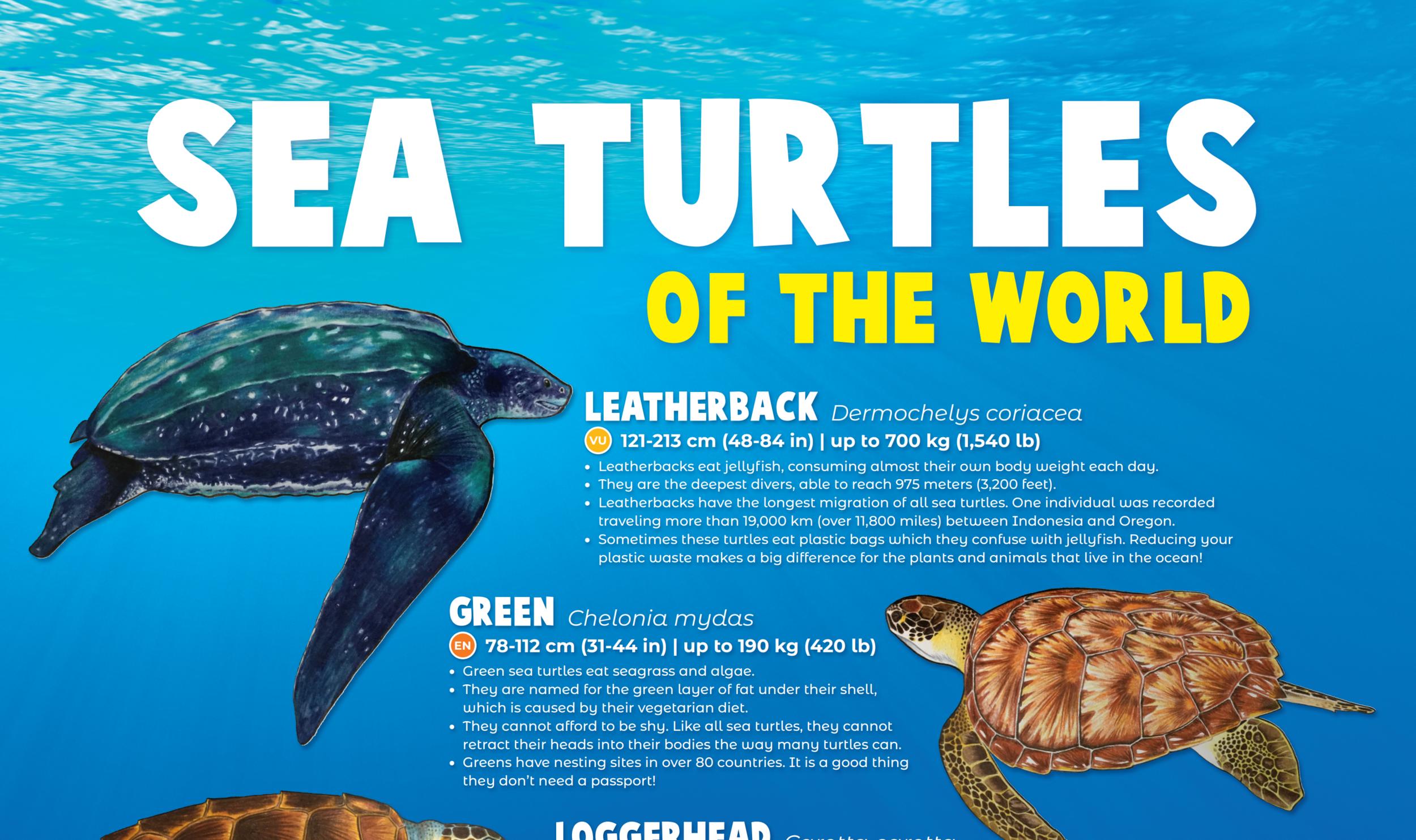 turtleeducation.PNG