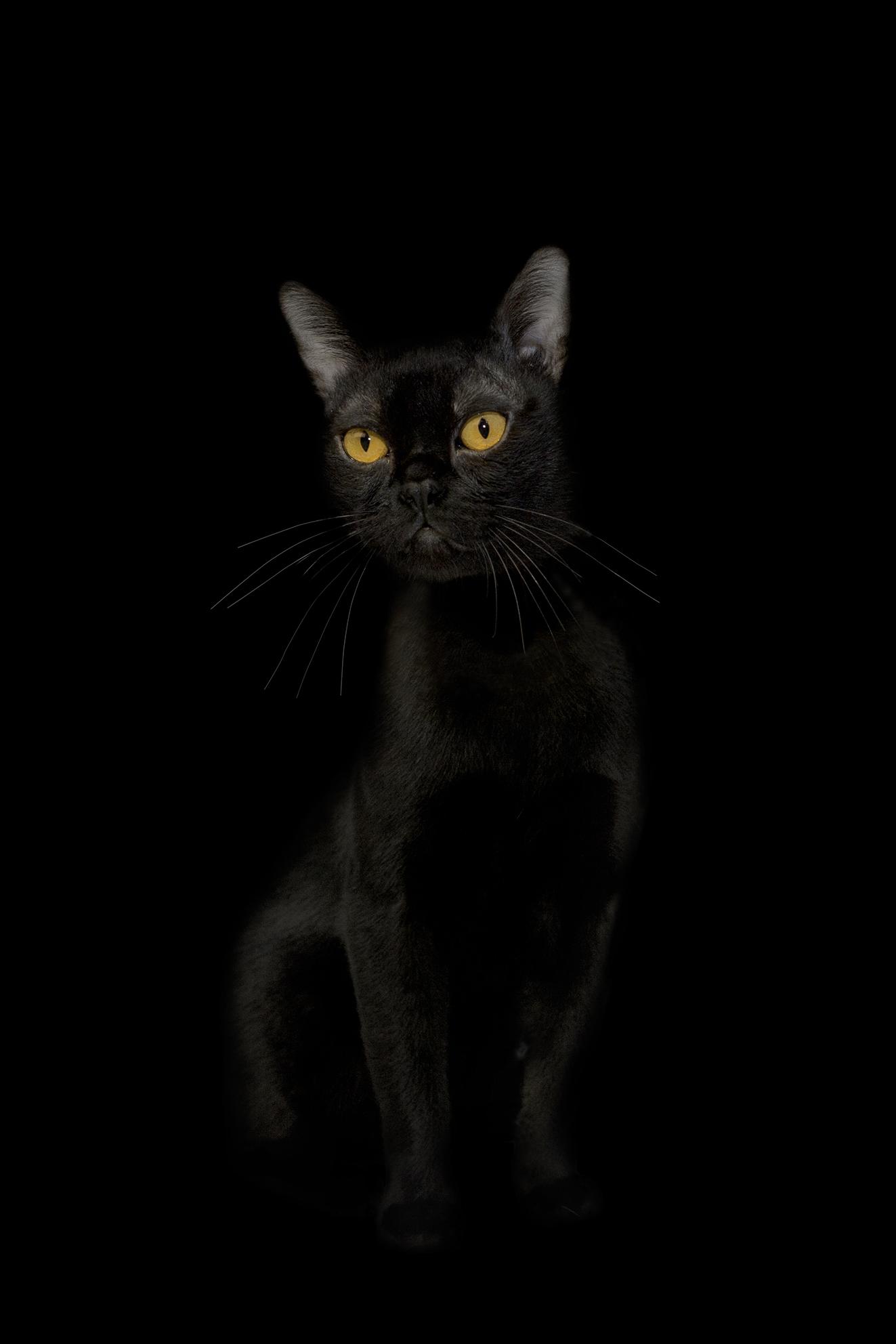 """Cat                                                                I 18""""X25.5"""""""