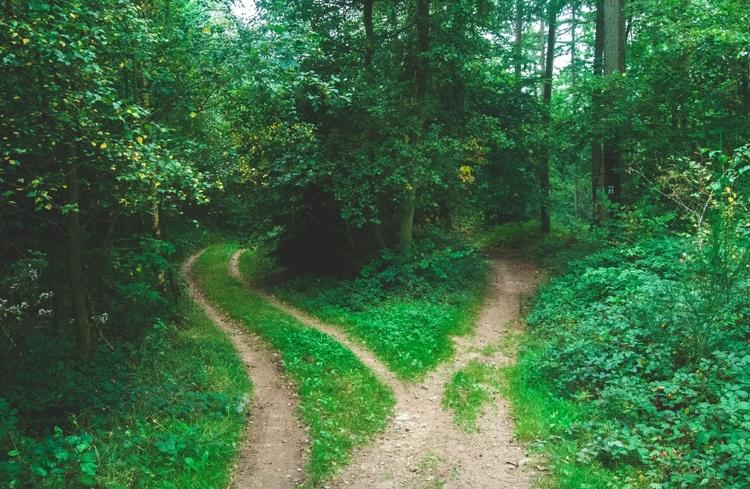 naturefork.jpg