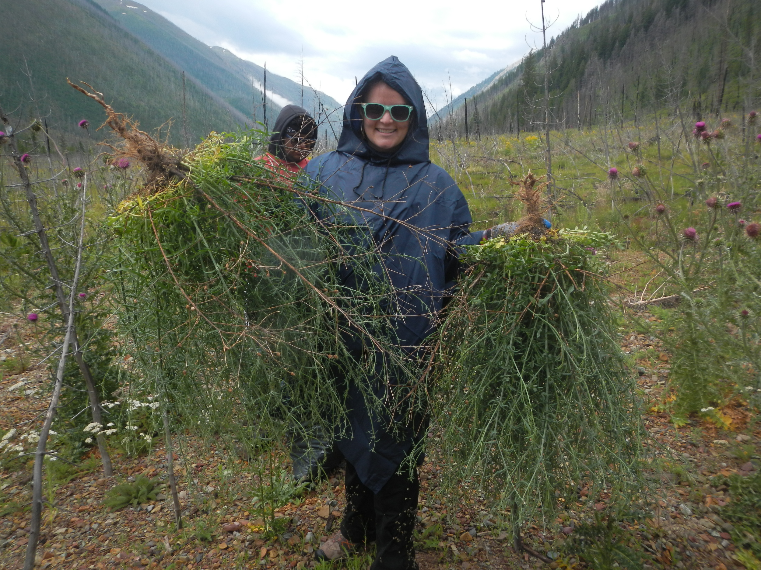 INVASIVE WEEDS MANAGEMENT TO PROTECT WILDLIFE HABITAT