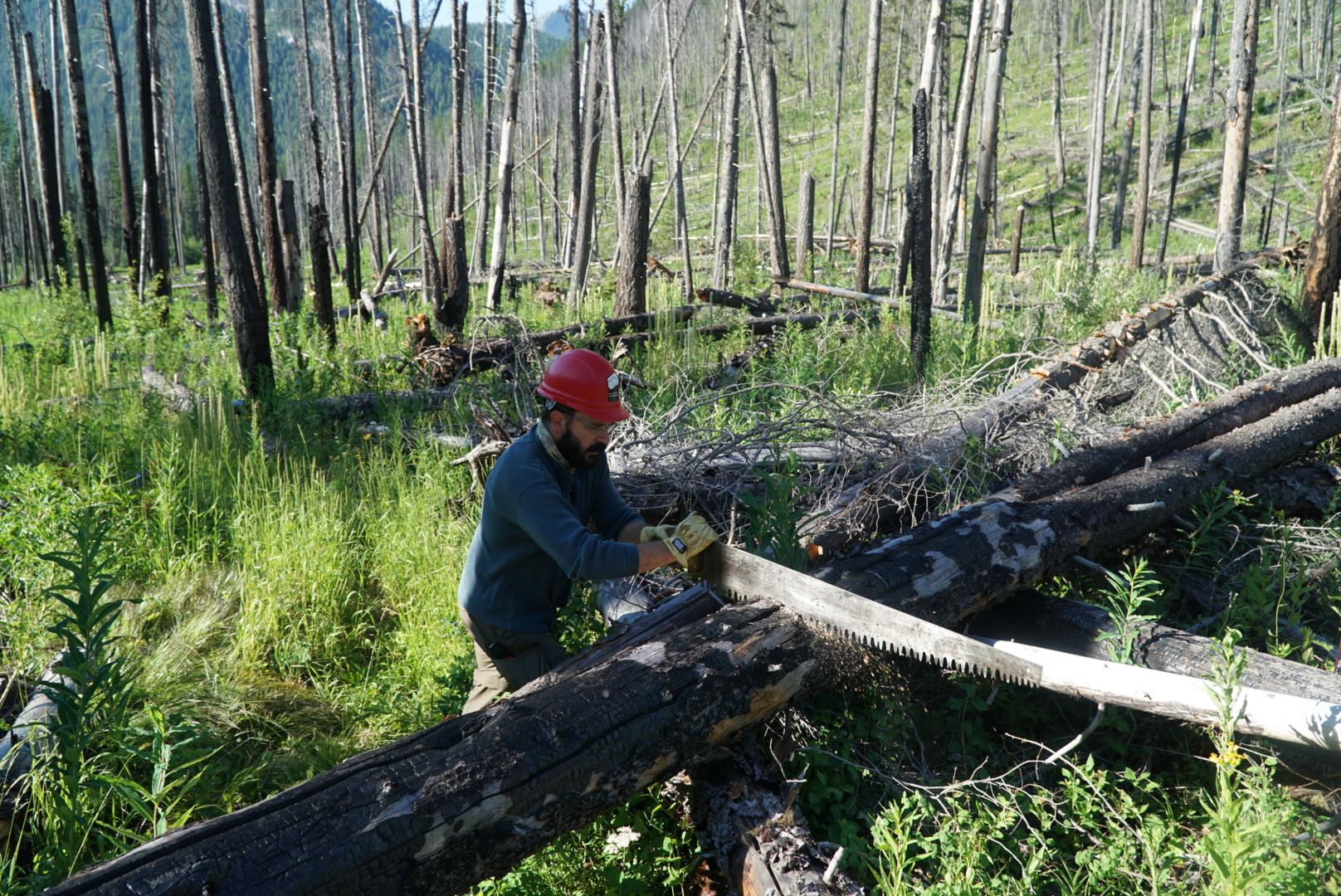 bob-marshall-wilderness-foundation-cutting-down-fallen-trees