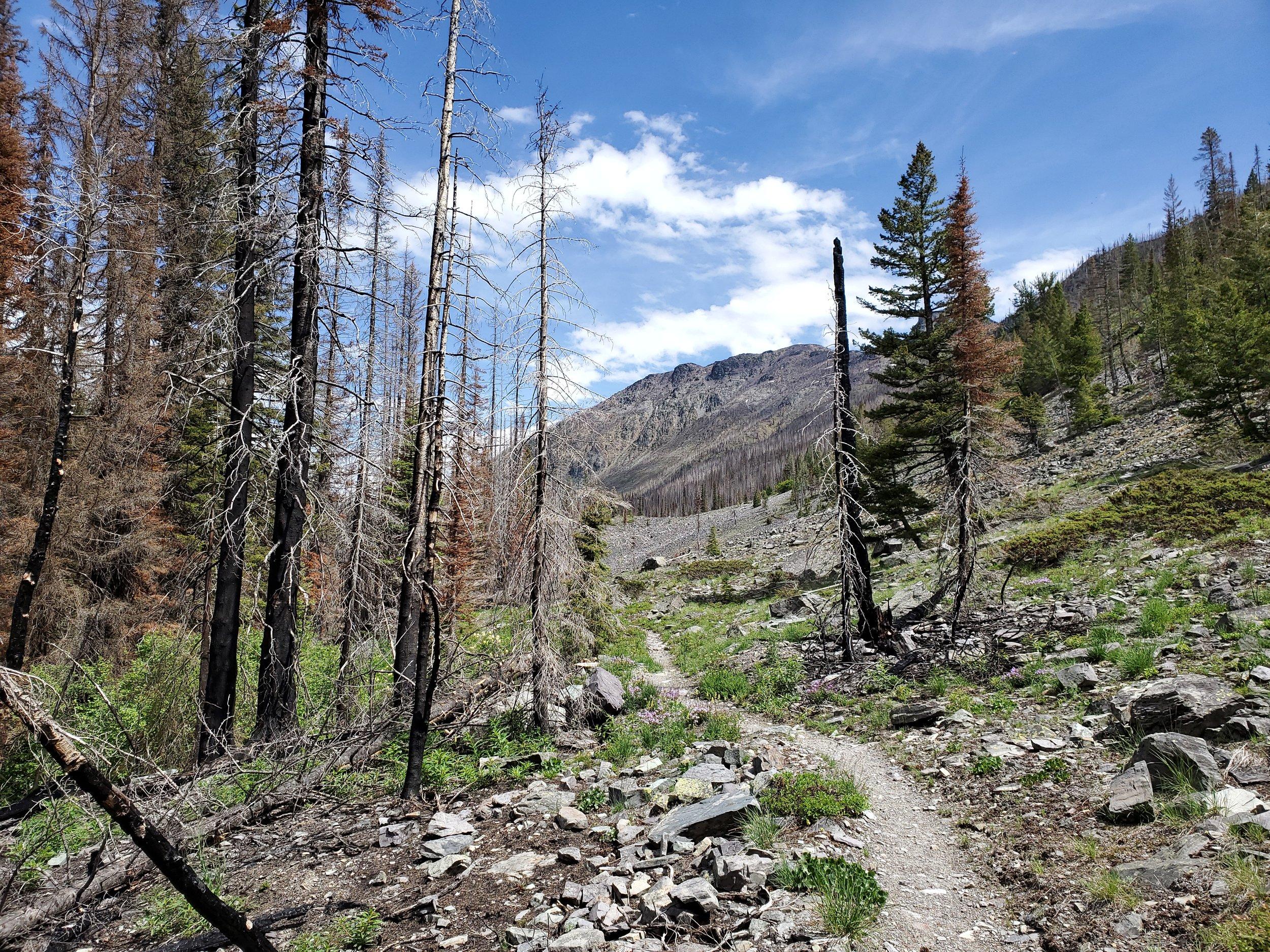 Matt Wilson..trail view.jpg